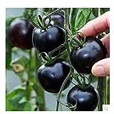 100 samen/pack tomaten samen schwarz perle balkon gemüse bonsai pflanze samen von tomatenpflanzen