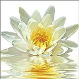 Artland Qualitätsbilder I Alu Dibond Bilder Alu Art 40 x 40 cm Botanik Blumen Seerose Foto Weiß A5LE Lotusblume schwimmt im Wasser