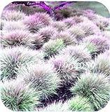 Pinkdose 100 Teile/beutel Bunte Schwingel Gras Bonsai Indoor Garten Festuca Mehrjährige Winterharte Zierpflanzen Einfach Wachsen Bonsai Sementes: 4