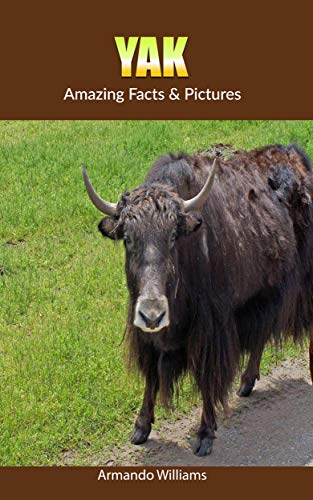 Yak: Amazing Facts & Pictures (English Edition) -