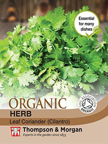 Thompson et Morgan???herbes Coriandre (Bio)???125?graines