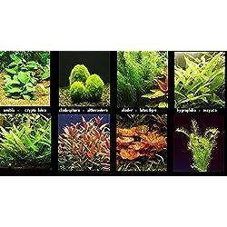 plante lot de 10 bouquets 5 varietes + 1 cladosphora