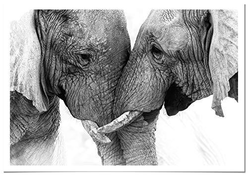 Panorama® Poster con Paspartú Elefante Pareja 50x35cm | Impreso en Papel 250gr | Poster de Animales | Cuadros Decorativos Animales | Cuadros Salón Modernos | Cuadros Dormitorio
