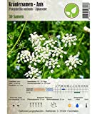 Kräutersamen - Anis/Pimpinella anisum L. 30 Samen