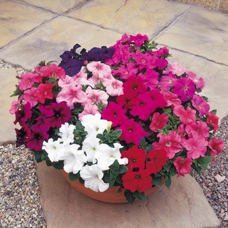 Fiori da balcone estivi: guida ai più bei fiori colorati per l ...