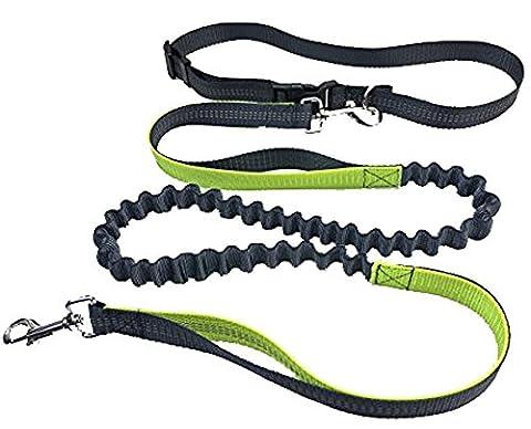 Longwu Animaux de toilette réglables Corde de traction Nylon Reflective Wire Dog Leash and Belt 1.6M-1.9M Vert