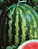 Seltene Wassermelone Samen Melitopolski Organisch gewachsen Ukrainische Heirloom