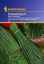 Pflanzenservice 910121 Kiepenkerl Schnittlauch Miro Mehrjährig