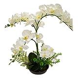 LianLe Kunstpflanze Orchidee mit Topf Phalaenopsis Kunstblume (Weiß)