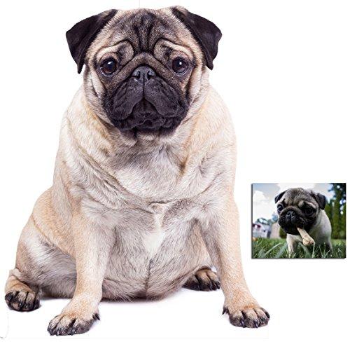 Fan Pack - Riesiger Pug Hund Lebensgrosse Pappaufsteller - mit 25cm x 20cm foto (Pooch Pack)