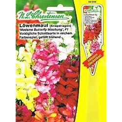 Löwenmaul 'Madame Butterfly Mischung' F1 vorzügliche Schnittsorte,großes Farbenspiel, gefüllt blühend, ( mit Stecketikett) 'Antirrhinum majus'