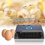 Cocoarm 40W Incubadoras Automaticas 12 Huevos Incubadoras Automaticas con Volteo Digital Automática Incubadora Gris Blanco 37.5 x 25.5 x 17 cm