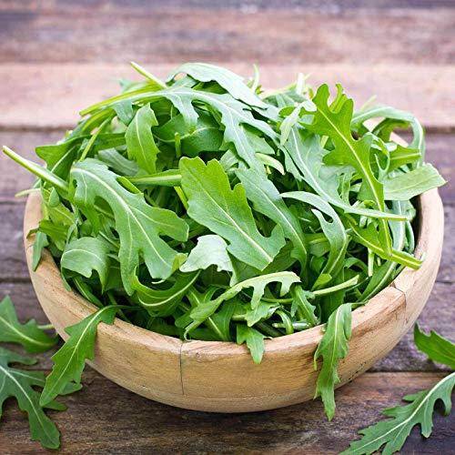 sconosciuto 4 oz: semi rucola organici - le verdi semi giardino insalata: microgreens, y greens