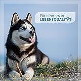 AniForte Calm & Relax Anti-Angst-Kapseln 100 Stück – Naturprodukt für Hunde - 4