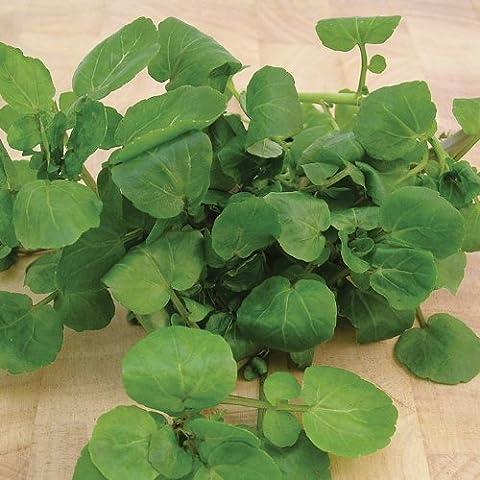 Suttons Seeds 161689 - Semi per crescione di terra per terreni umidi