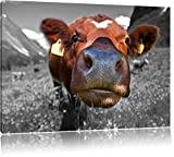 ausgewachsene Kuh auf Bergwiese schwarz/weiß Format: 60x40 auf Leinwand, XXL riesige Bilder fertig gerahmt mit Keilrahmen, Kunstdruck auf Wandbild mit Rahmen, günstiger als Gemälde oder Ölbild, kein Poster oder Plakat