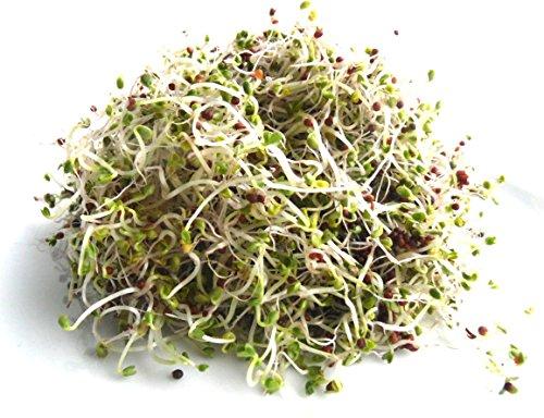 100 Pak (100 g BIO Keimsprossen Pak Choi (Chinesicher Senfkohl) Samen für die Sprossenanzucht Sprossen Microgreen Mikrogrün)