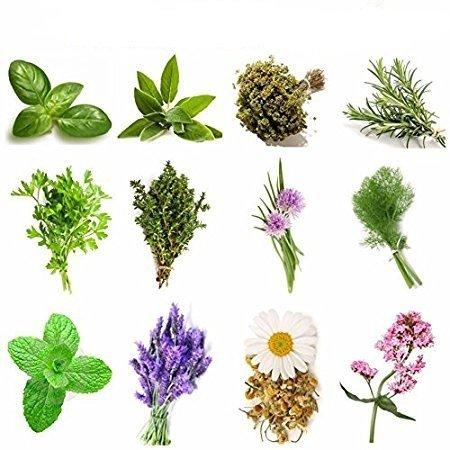 kit erbe aromatiche 240 semi strani in 12 varietà, collezione 1, più piccola guida alla coltivazione