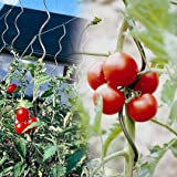 Tuteur à tomate torsadé avec chas - Vendu par 5Grâce à sa forme originale en spirale, vos plants de tomates s'y enroulent et se fixent naturellement sans aucune attache.Muni de chas pour garantir un meilleur maintien de vos plants, les tuteurs à toma...