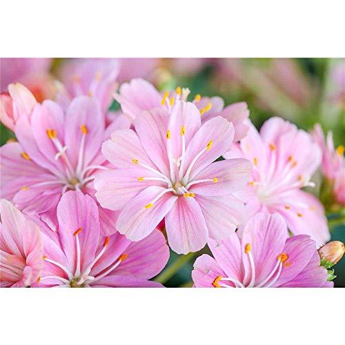 Blumen Eber