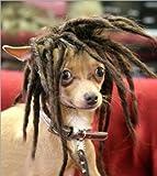NxawRt - Peluca para Perro, Disfraz de Perro pequeño, Accesorios de Peluca de Alambre sintético para Halloween, Navidad, Eve, Festival, Cosplay, Fiestas