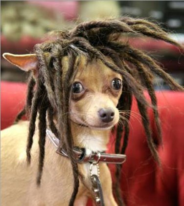 Peluca Rasta para Perros Pequeños