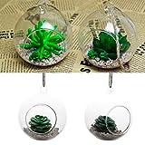 SENZEAL 1 Paquet de 2 Pot Vase Suspendu de Verre Boule Transparentes Terrarium pour...