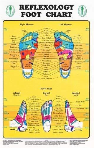 Reflexzonenmassage Fuß Diagramm-Fußreflexzonen markiert. 1Laminiertes Diagramm 20,3x 27,9cm -
