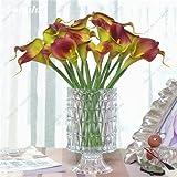 100 semillas piezas de flor de la cala del lirio de semillas de interior Bonsai planta de semillas de flores perenne jardinería bricolaje fácil crecer mejor regalo para la esposa 16