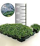 ZUNTO stern von bethlehem pflanze Haken Selbstklebend Bad und Küche Handtuchhalter Kleiderhaken Ohne Bohren 4 Stück