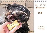 Emmas Keks-Geheimnisse (Tischkalender 2018 DIN A5 quer): Hundekekse mit Mehrwert (Monatskalender, 14 Seiten ) (CALVENDO Tiere)