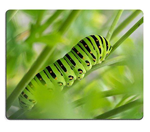 msd-natural-rubber-gaming-mousepad-image-id-31781857-5-eta-larve-dei-papilio-macaone
