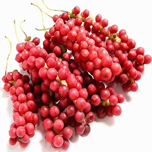 mymotto 100 Pcs Adorable Flower graines parfumées fleurs parfumées Redbranch graines