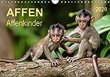 Affen - Affenkinder (Wandkalender 2020 DIN A4 quer)