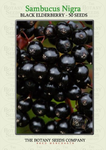 Schwarzer Black Lace®