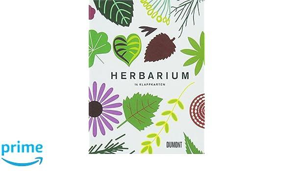 Herbarium 16 Klappkarten Amazonde Caz Hildebrand Bücher