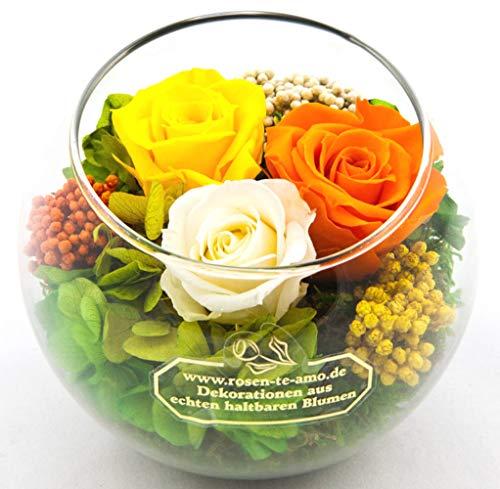 Rosen-te-amo Haltbare Blumen-Strauß in Kugel Vase (Φ 11 cm) 3 Konservierte Rosen 3 Jahre haltbar ohne Wasser - Infinity Rosen-Kugel  Größe Glass Bowl Christmas Rose Bowl