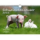 Svinsbärare DIN A4-kalender för 2021 gris – presentset Innehåll: 1 kalender, 1 st. jul- och 1 hälsningskort (totalt 3 delar)