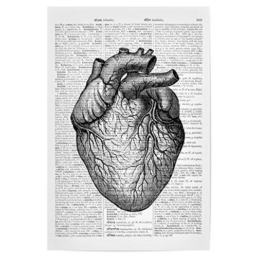 artboxONE Poster 30x20 cm Anatomie Schwarzweiß Herz - Bild Märchen romantik lexikonseiten
