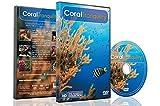 DVD subacuático - Tranquilidad Coral 2016 escenas calmantes de peces tropicales y música relajante