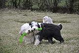 Hunter 61101 Hundespielzeug von Kong, Safestix, S, 30 cm, Farblich Sortiert - 2