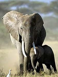 Posters: Eléphants Poster Reproduction - Mère Éléphant Et Bébé, Michel Denis-Huot (40 x 30 cm)