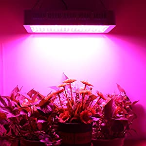KINGBO 600W 1000W 1500W 2000W Double Chips LED Grow Light Full Spectrum Grow Lamp Plant Grow Lights with Rope Hanger Daisy Chain for Indoor Greenhouse Hydroponic Plants Growing by KINGBO LED