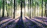 REINDERS Verzauberter Wald - Wandbild 118 x 70 cm