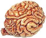Halloween Deko menschliches Gehirn
