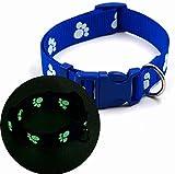 Knochenhalsband Hundehalsband für Ihren Hund 22 - 33cm Gr S *Nachts leuchtend - fluoreszierend* (S, Blau)