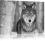 wunderschöner wachsamer Wolf schwarz/weiß Format: 100x70 auf Leinwand, XXL riesige Bilder fertig gerahmt mit Keilrahmen, Kunstdruck auf Wandbild mit Rahmen, günstiger als Gemälde oder Ölbild, kein Poster oder Plakat
