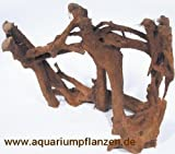 1 Mangrovenwurzel 20-25 cm, Wurzel, Mangrove