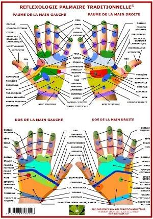 Planche de Pratique de la Reflexologie Palmaire Traditionnelle A4
