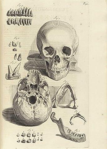 Poster Anatomie - Millésime Anatomie